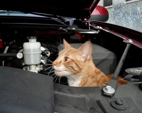Кошки под капотом Лады Калины-2. Автомобили Лада Калина 2. Новости, описание, видео.