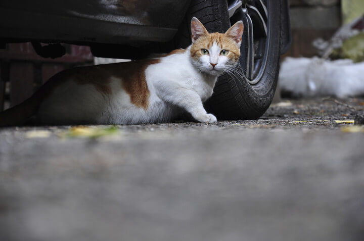 Кошкам легко попасть в моторный отсек Калины-2. Автомобили Лада Калина 2. Новости, описание, видео.
